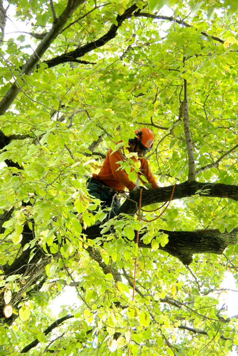 Jim's Tree Service - McGrath, MN